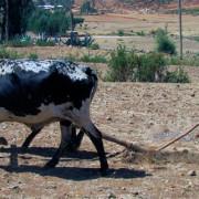 Etiopia Obiettivi Sviluppo Millennio