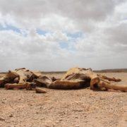 ETIOPIA E SUD SUDAN EMERGENZE
