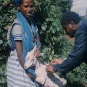 In Etiopia le Donne Combattono la Povertà con le Capre
