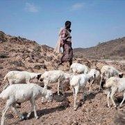 Una nuova speranza per i pastori d'Etiopia